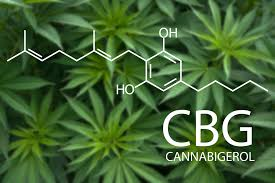 Press Release: CBG Called the 'Stem Cell' Of Cannabinoids and Could be More Profitable Than CBD