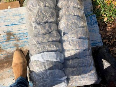 Australia: Police warn of cross-border drug trafficking amid coronavirus after Adelaide cannabis bust