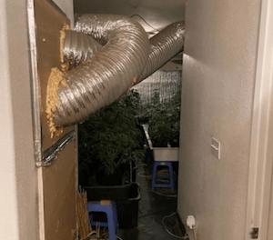 USA: Over 800 marijuana plants found growing inside a Tulare home