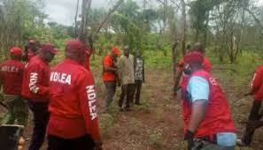 Nigeria:  NDLEA destroys largest cannabis farm in Kogi