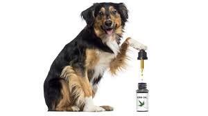 Hemp-derived CBD market for pets worth $60 million in 2020, with threefold growth projected