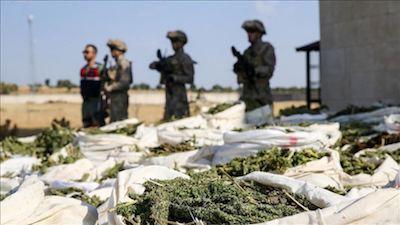 Turkey: 4 tons of marijuana, 236K cannabis  seized