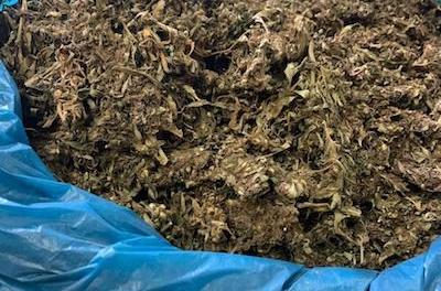 Trinidad – Police Find Church Full Of  Weed !