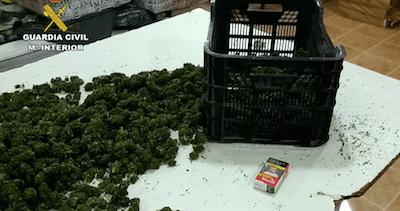 Spain seizes huge haul of 372,000 cannabis plants