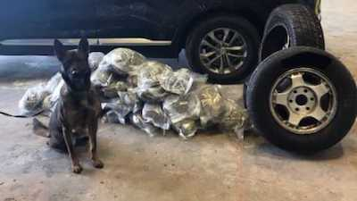 K9 Leeroy assists in seizure of 25 pounds of weed
