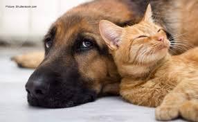 Associated Hemp Launches New Premium CBD Pet Line