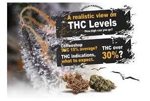 Florida: Poll – Respondents Say … THC Caps – No Thanks
