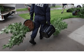 More Endless Minor Drug Busts From Australia For Past 4/5 Days