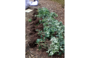Police seize 80 cannabis plants from empty property