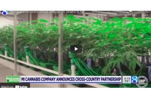 Marijuana company brings popular CA strains to MI