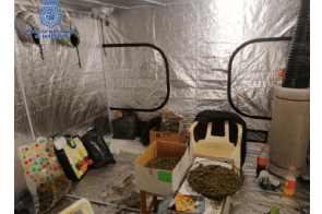 Spain: Four arrests in Mallorca in national police drugs operation