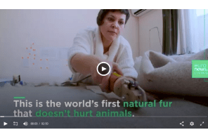 Biodegradable Fur Made From Cannabis – The Future of Fur?