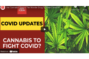 Are Cannabis Strains The Wonder Drug To Treat Covid19?