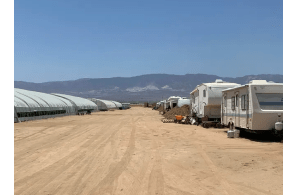 USA – California: Sheriff's officials: 76,118 marijuana plants destroyed at Lucerne Valley grow posing as hemp site