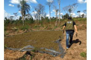 Paraguay Destroys 346 Tons of Weed