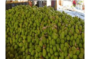 India: 700 kg marijuana hidden with mangoes seized in Jamshedpur (city's) biggest drug haul