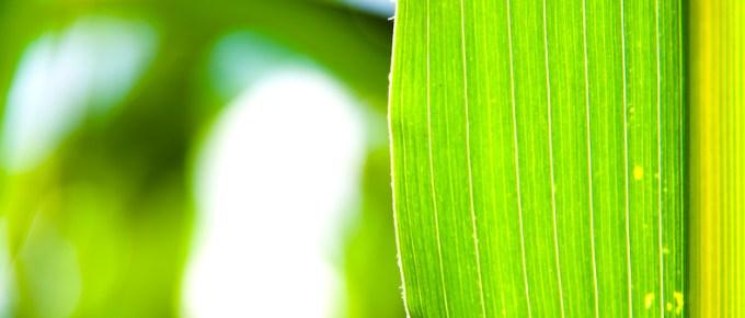 groen door Jeffrey Wakanno