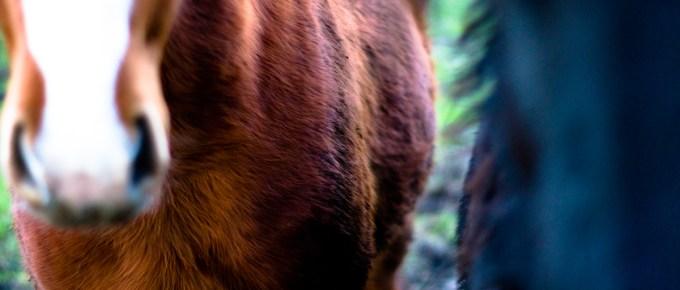 Jeffrey Wakanno hynders en paarden