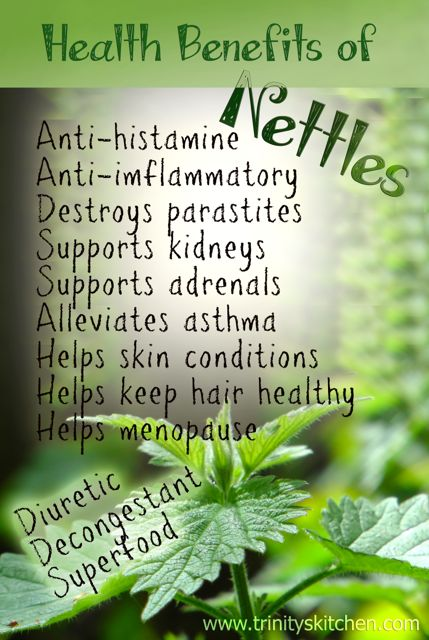 The Health Benefits of Nettles + 'Very Nettle' Wild Soup