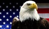 American_Bald_Eagle