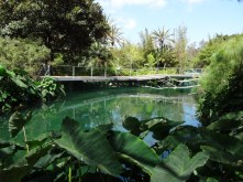 San Diego zoo pool