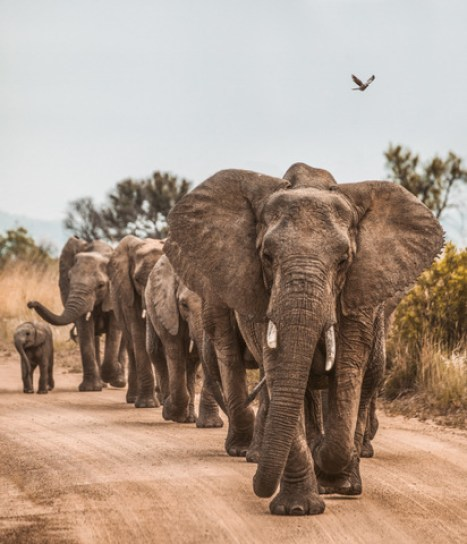 africa-safari-african-10
