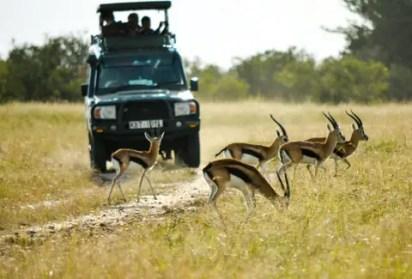 africa-safari-african-12