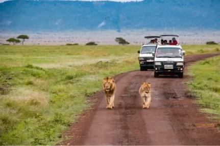 africa-safari-african-3