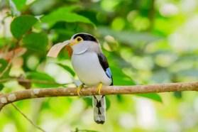 bird-2784006