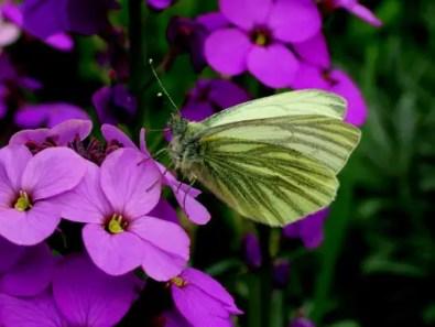 butterfly-645527