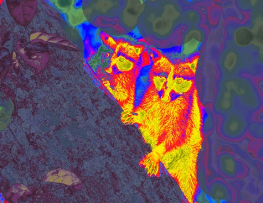 camping-night-thermal-infrared-1