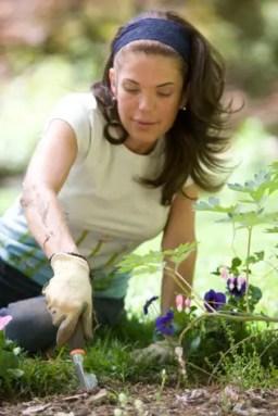 garden gardening