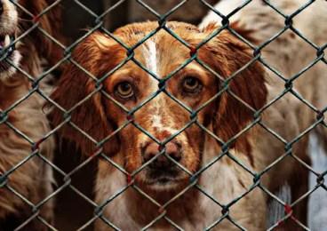 dog-pet-rescue-3