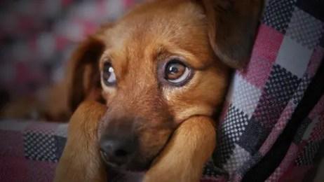 dog-pet-rescue-5