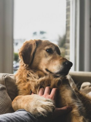 dog-pet-rescue-8