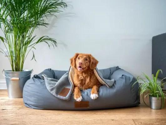 dog-pet-rescue-9