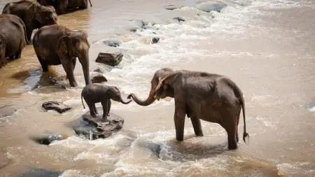 elephants-1900332