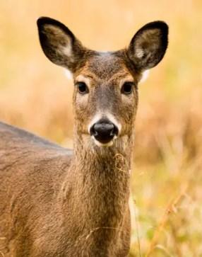 hunting-deer-2
