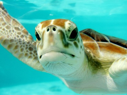 turtle sea