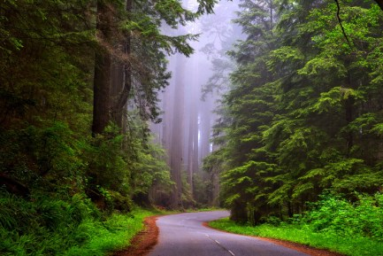 redwood-national-park-1587301
