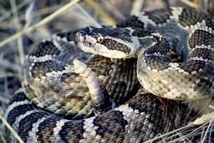 snake-2799910