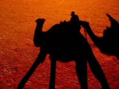 tunisia camel