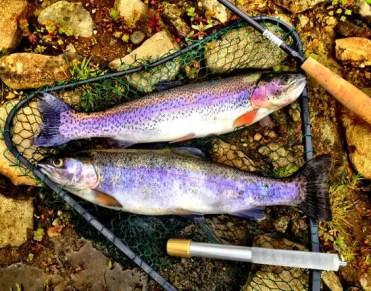 trout-2060370_1280