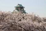 大阪桜の名所2016定番の4選!天守閣の桜や夜桜公園でお花見を!