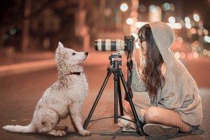 puppy-3688871_640