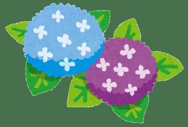 青と紫のあじさいのイラスト