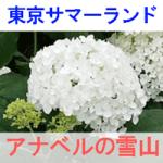 東京サマーランドのアナベルの雪山を紹介する画像