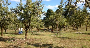 Does Your Town Have a Public Orchard?