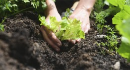 Five Simple Ways to Improve Soil Quality For Successful Crops Year After Year