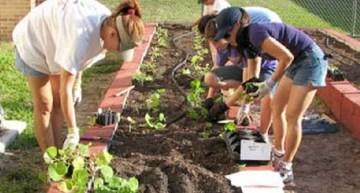 Is Your Urban Garden Safe?